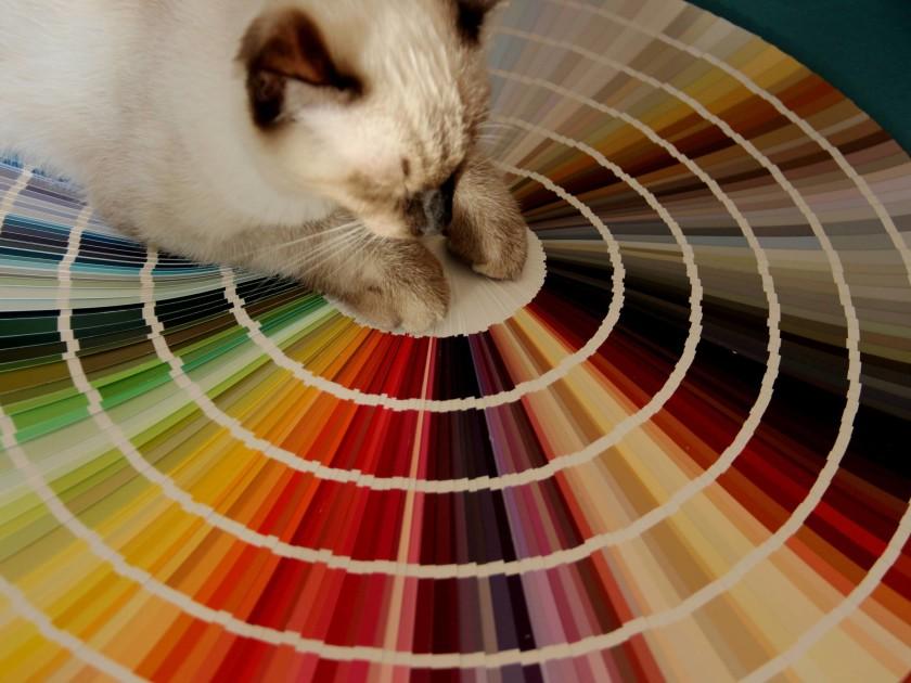 La Coloratrice_Cartella colori_gatto